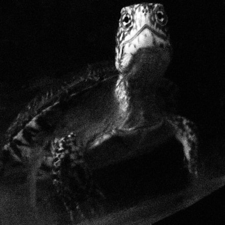 Portrait of the Turtle., Canon POWERSHOT A3300 IS