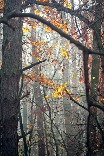 Photograph forest in the morning by Alina March on 500px