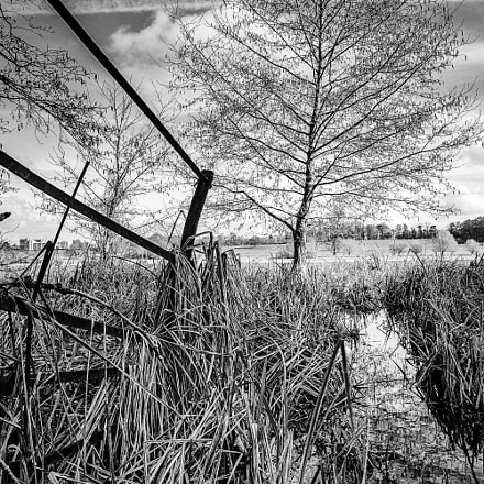 Lake Tree, Canon EOS 700D, Canon EF 16-35mm f/4L IS USM