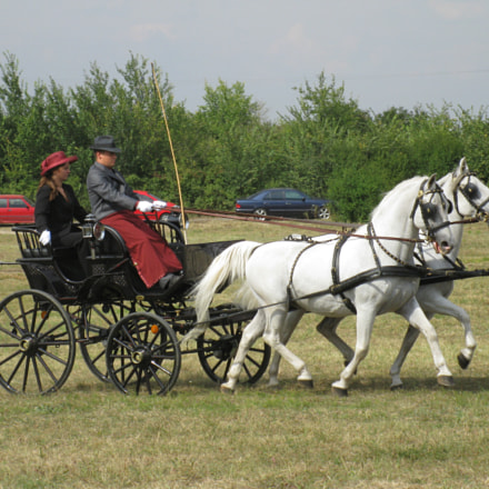 equestrian carriage 5, Canon POWERSHOT A2000 IS
