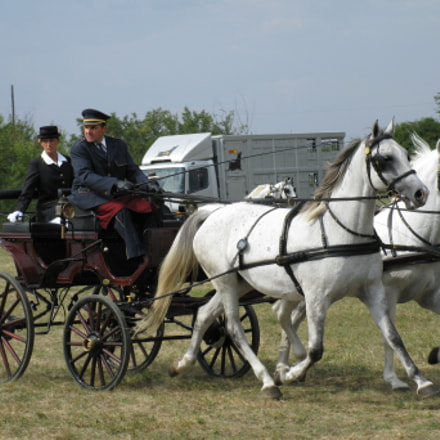 equestrian carriage 9, Canon POWERSHOT A2000 IS