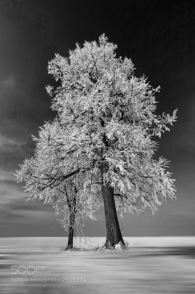 Photograph Tree by Albin Bezjak on 500px