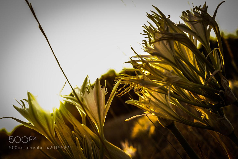 Photograph Sunset 2 by Edoardo Luis Carrera on 500px