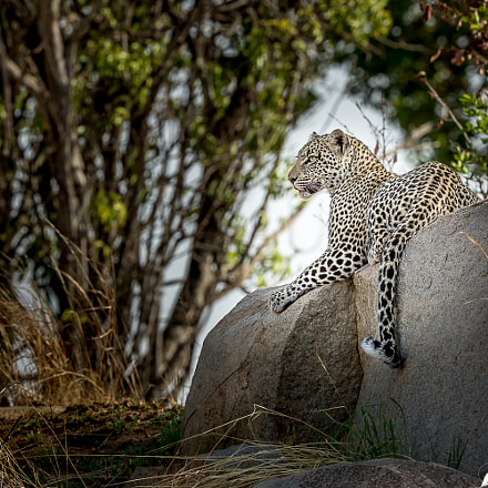The Enchanting young Leopardess, Canon EOS-1D X MARK II, Canon EF 200-400mm f/4L IS USM