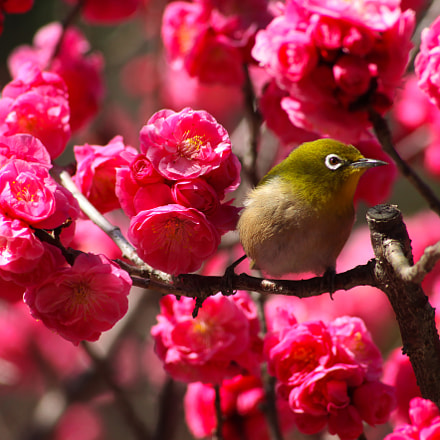 spring bird, Canon EOS 5D MARK II, Canon EF 35-70mm f/3.5-4.5A
