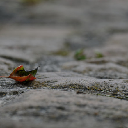 on the pavement