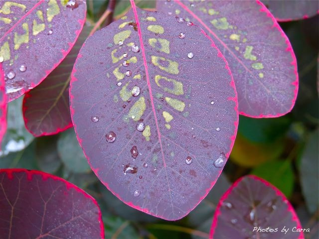 Photograph Pink drops by Carra Riley on 500px