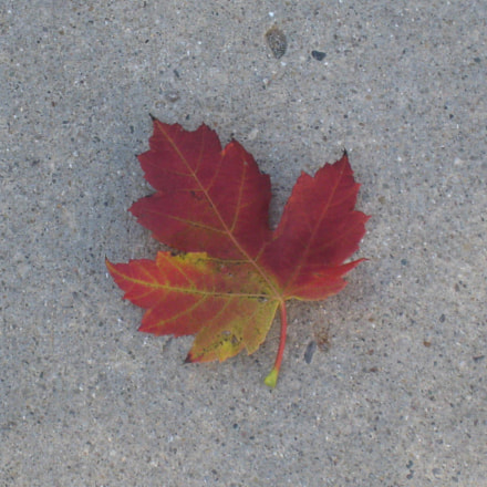 Single Fall Leaf, Canon POWERSHOT SD870 IS