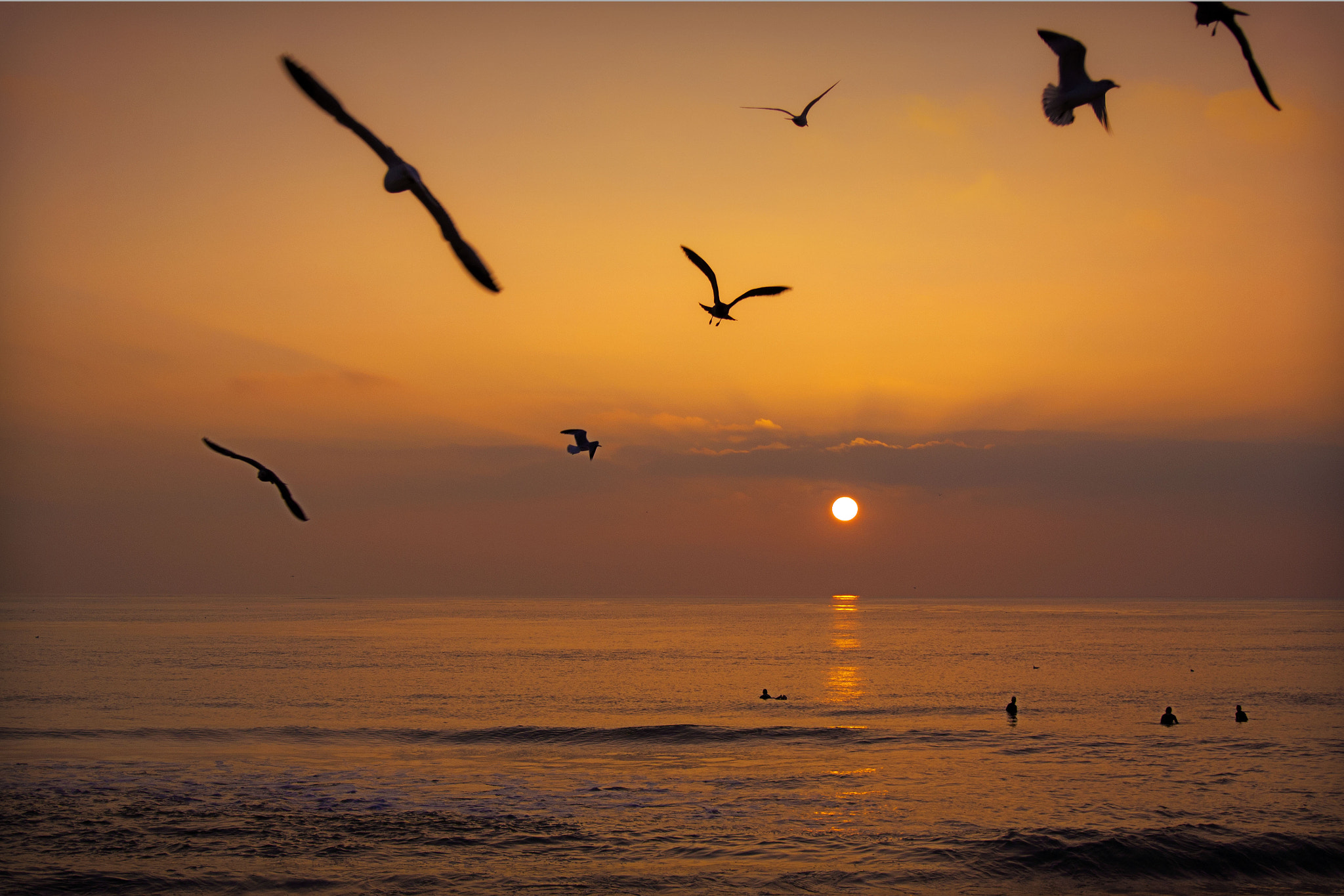 Photograph Seagulls in Flight at Sunset in Oceanside - December 8, 2012  by Rich Cruse on 500px