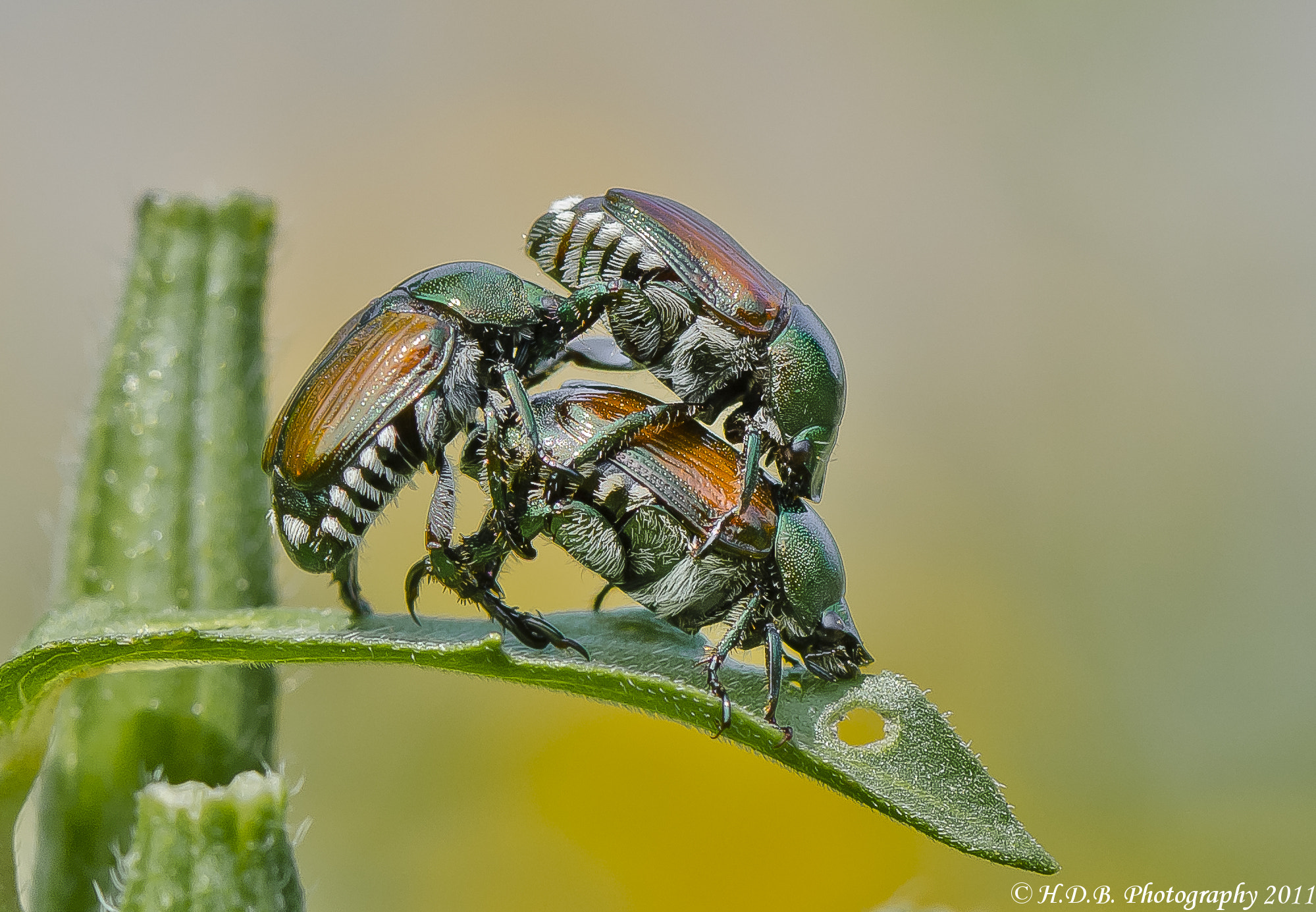 Photograph Beetle Pyramid  by Harold Begun on 500px