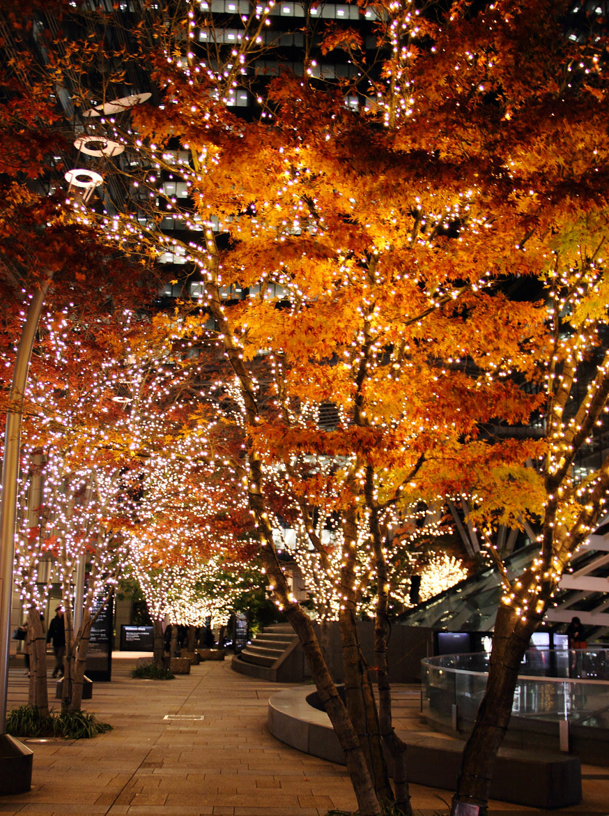 Photograph Autumn leaves with X'mas lights by Ka Ngsm on 500px