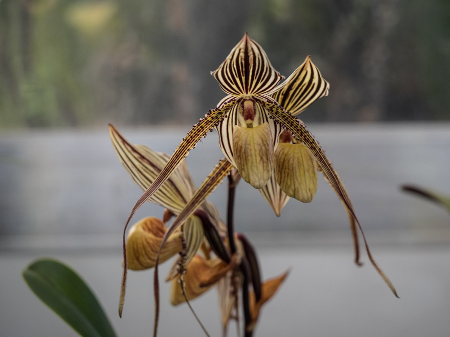Orchidaceae by John Poltrack on 500px.com