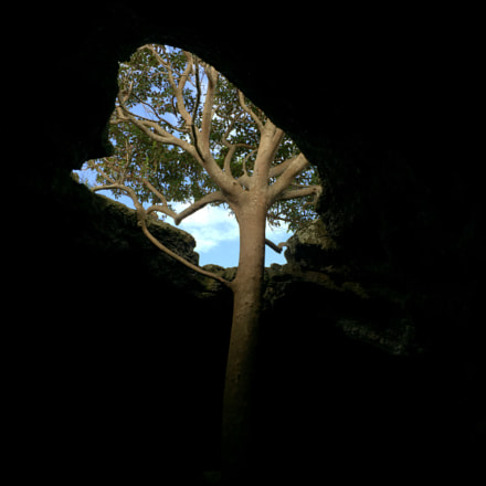 Tree in a Cave