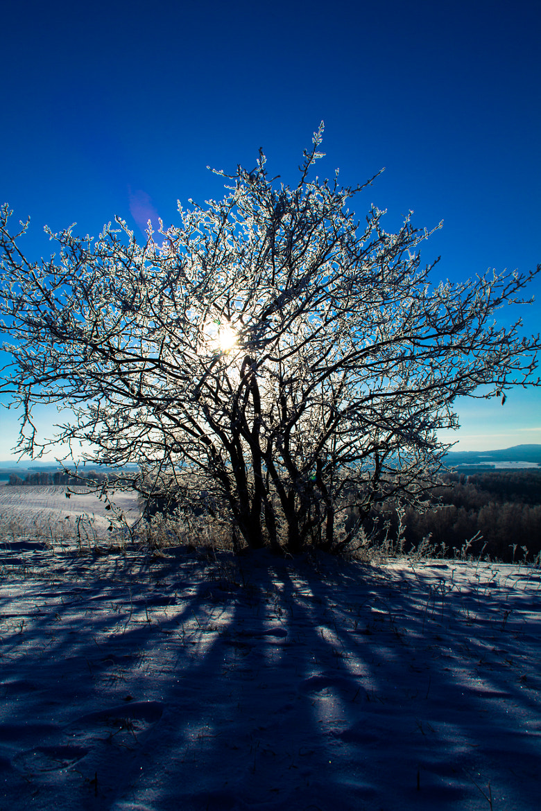Photograph winter Afternoon by Dmitrii Gorlov on 500px