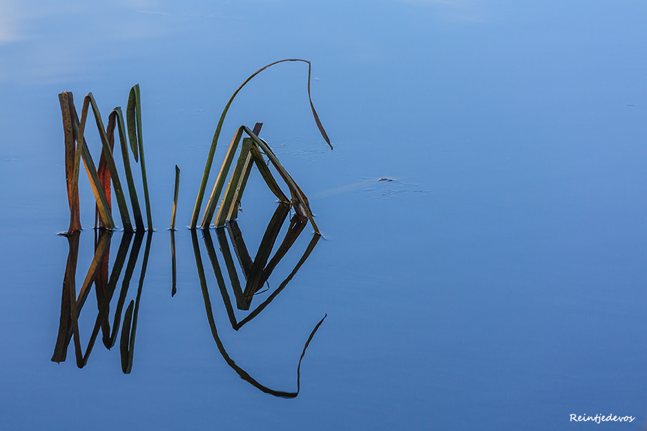 Photograph Diamonds are for ever! by Reina Smallenbroek on 500px