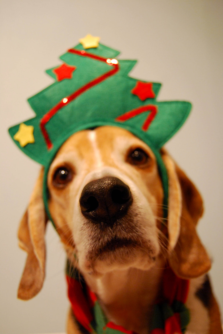 Photograph Holiday Bogey by Heather D Conley on 500px