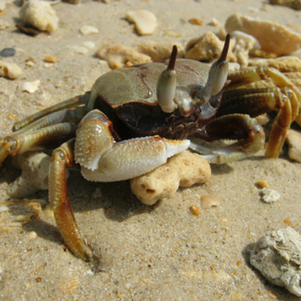 crab from Krabi, Canon POWERSHOT A495