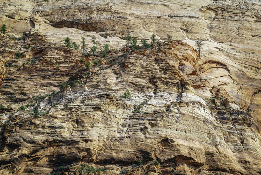 Zion National Park XV