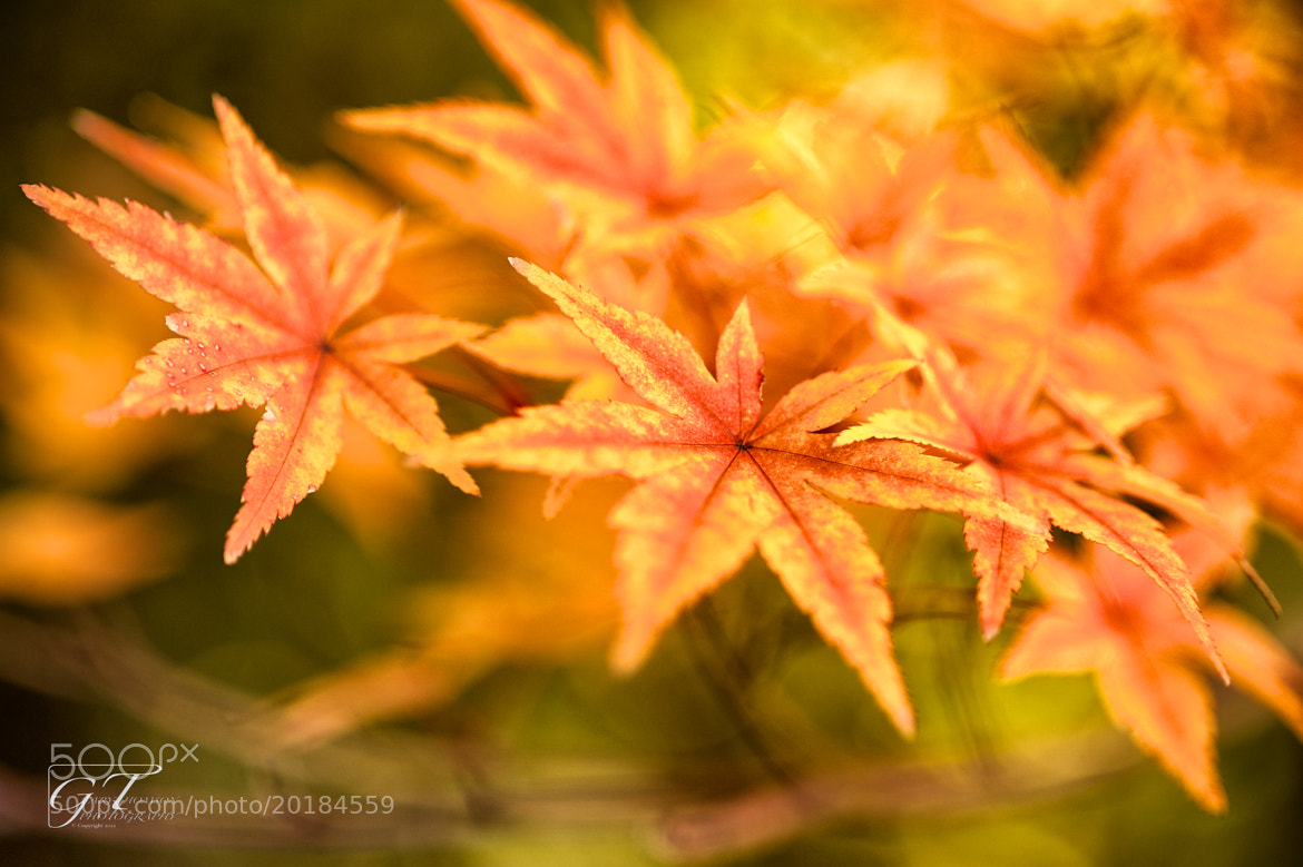 Photograph Changing leaves by Gary Thomson  Photography on 500px