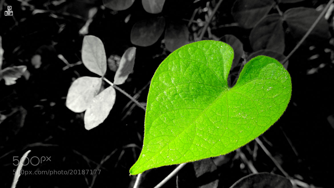 Photograph Green Heart  by Krishna Kumar on 500px