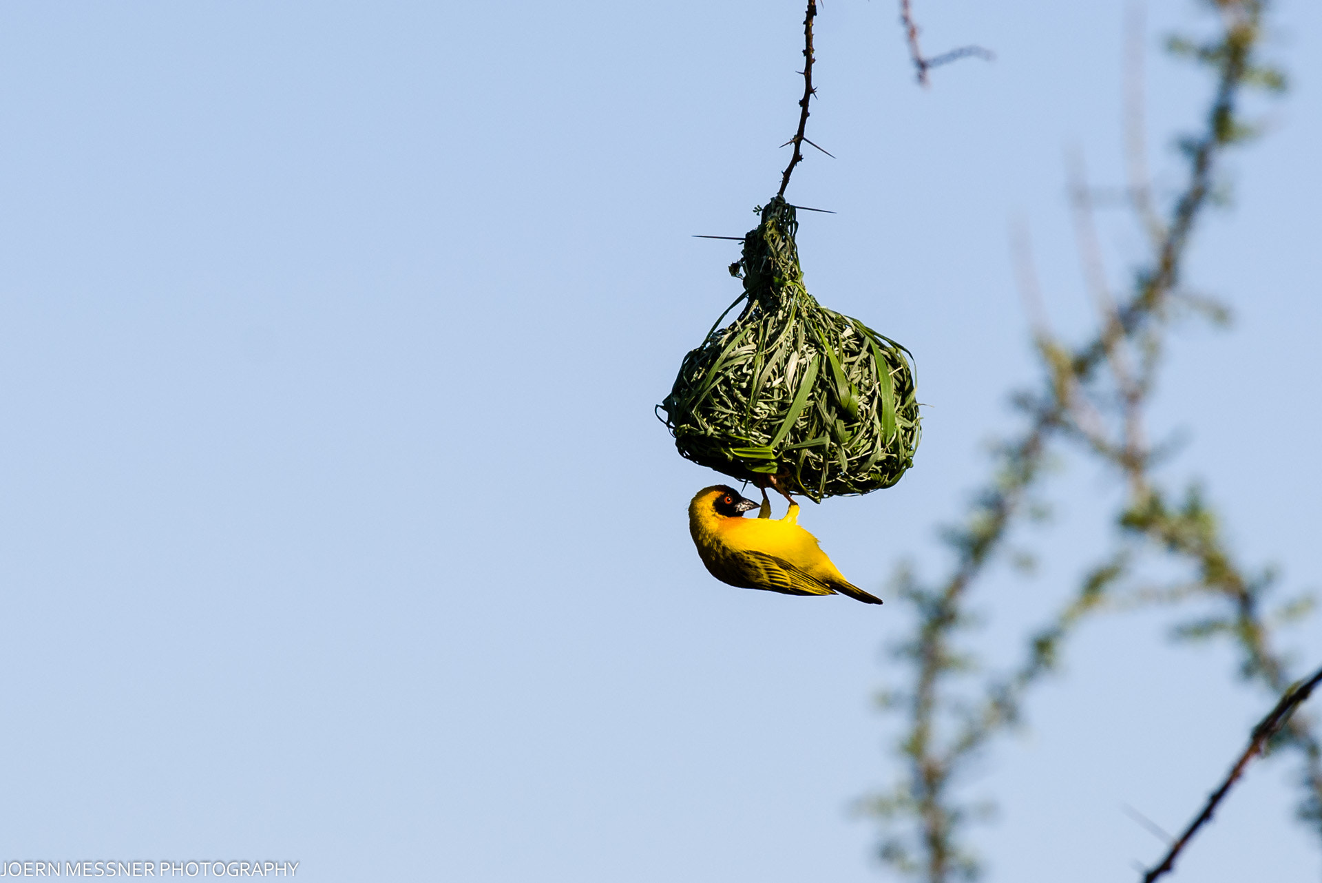 Photograph Social Weaver by Joern Messner on 500px