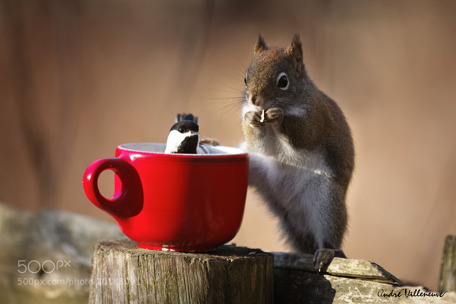 Photograph Taking a cup together by Andre Villeneuve on 500px