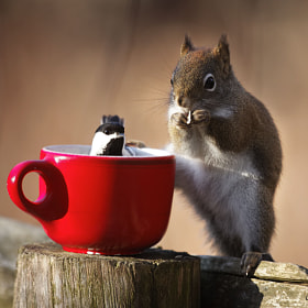 Taking a cup together by Andre Villeneuve (Andre_Villeneuve)) on 500px.com