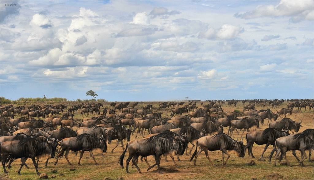 Photograph The great migration by Elmar Weiss on 500px