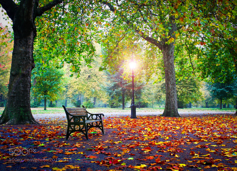 Photograph Autumn Light by Malcolm Corbett on 500px