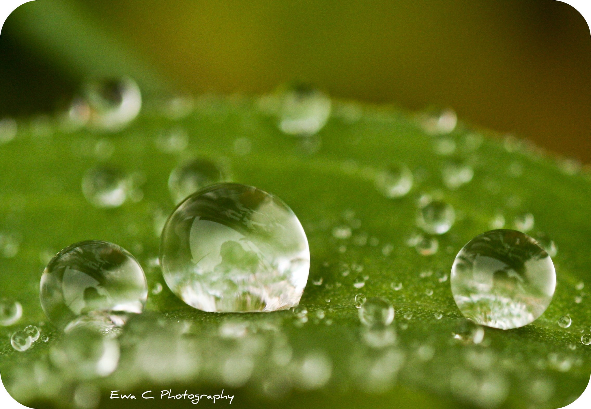 Photograph Three green drops by EWA CIEBIERA on 500px