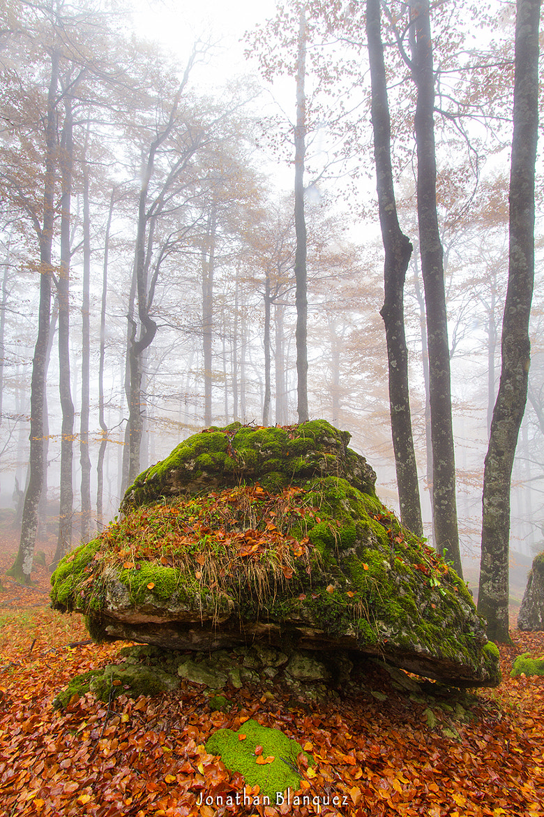Photograph A mushroom of the enchanted forest by Jonathan Blanquez on 500px