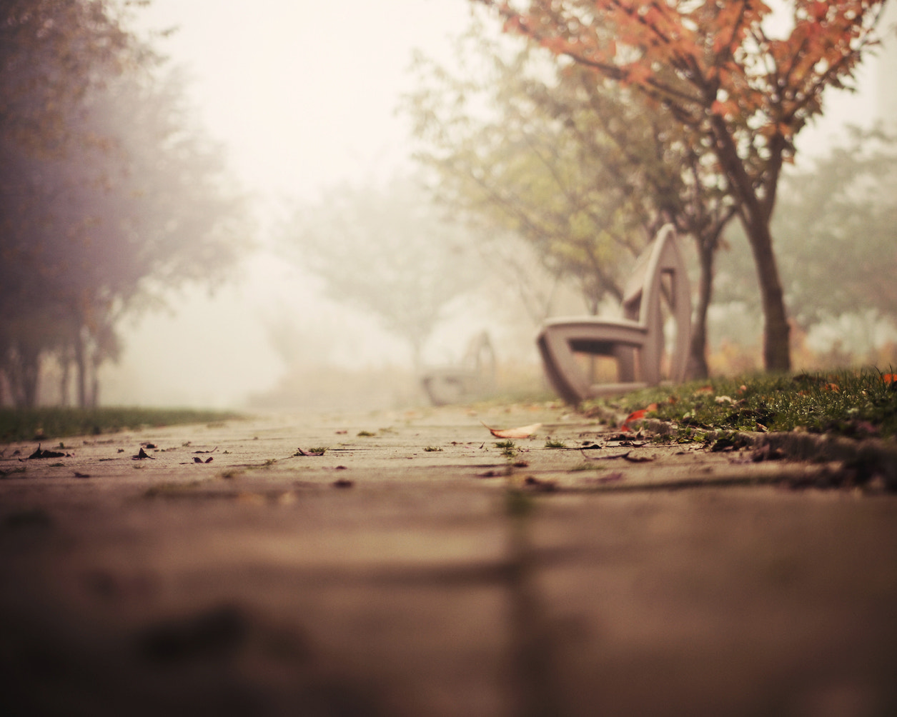 Photograph Leaves on your path by Justyna Frąckowiak on 500px