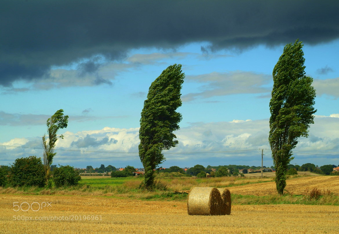Photograph Windswept trees by Mike Baker on 500px