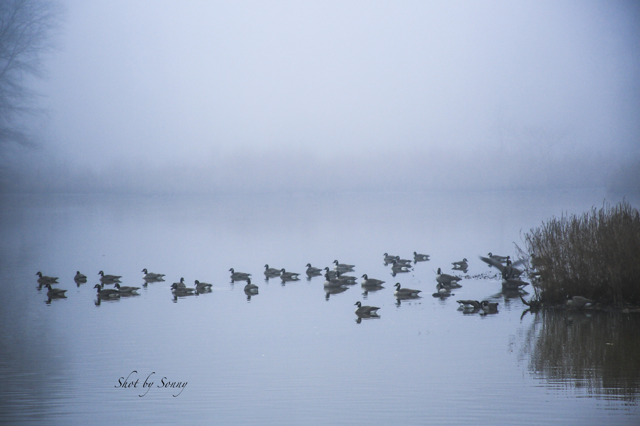 Photograph Ducks in a row. . . by Sonny Hamauchi on 500px