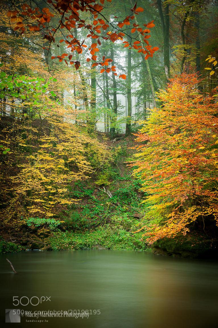 Photograph Irrel Falls by Maciej Markiewicz on 500px