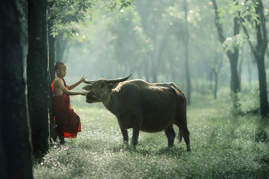 Photograph harmony......... by asit  on 500px