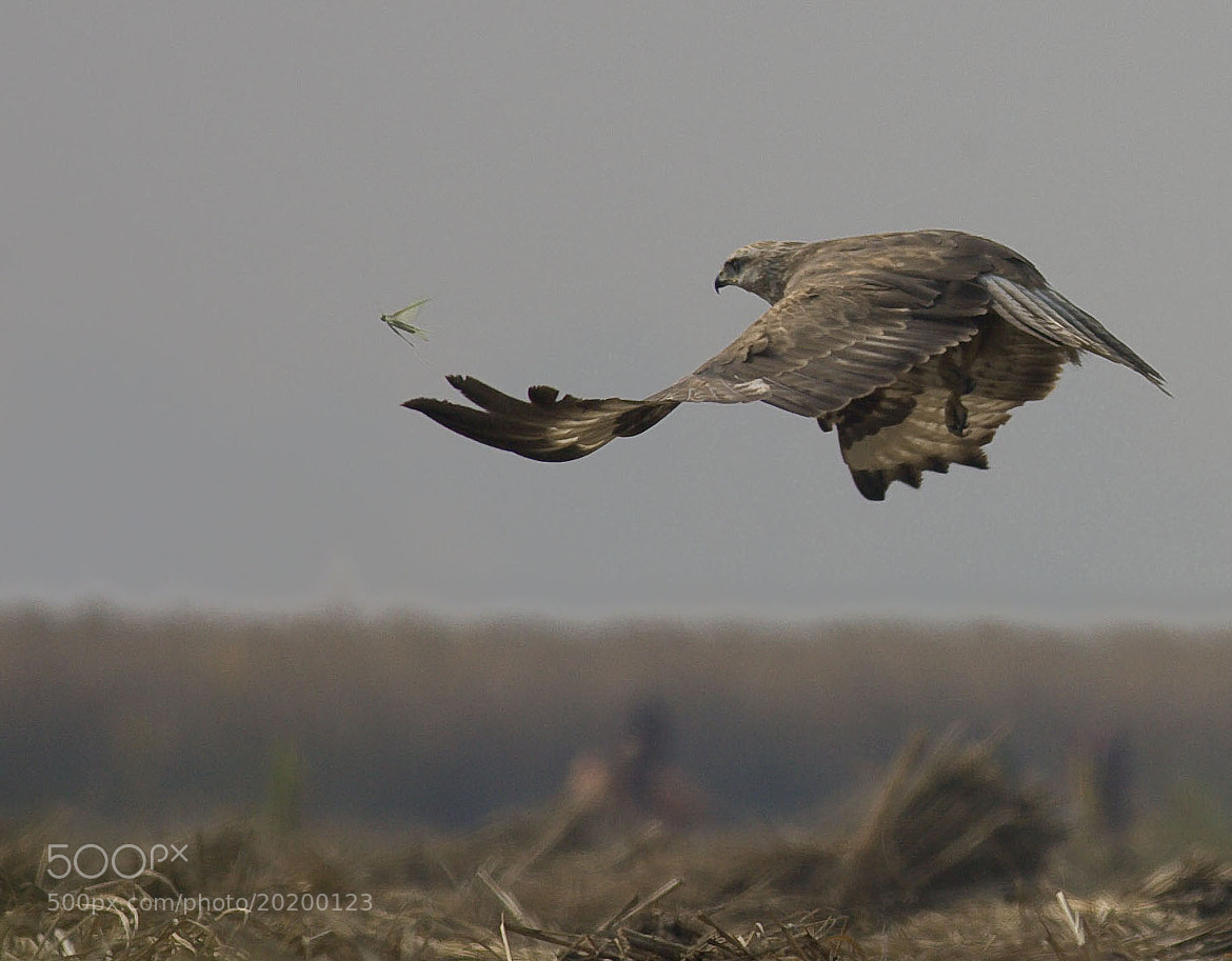 Photograph The chase by Pankaj Ratna on 500px