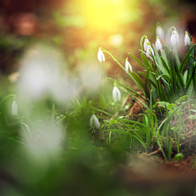 Spring is here by Bogdan D Photographer
