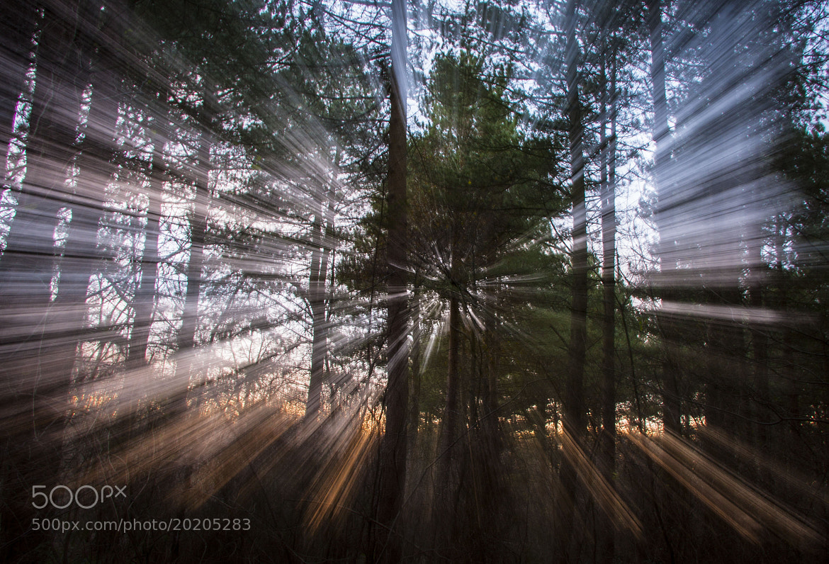 Photograph Sunset through the trees by David Asch on 500px