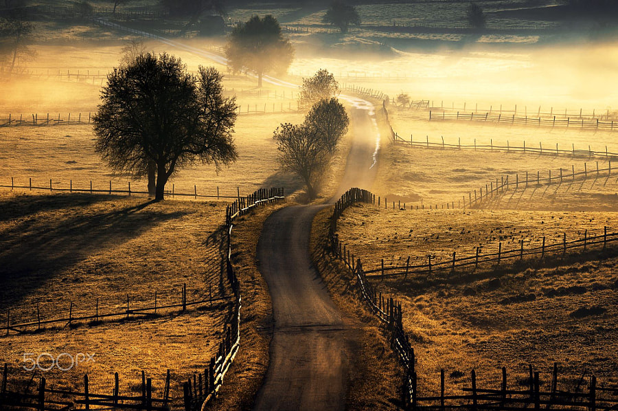 The path de Adnan Bubalo sur 500px.com