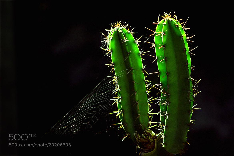 Photograph CACTUS by Domen  Dolenc on 500px