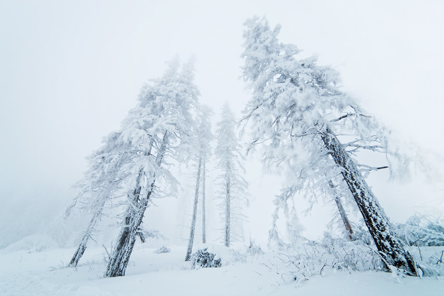 Photograph Whiteout by Pavel Pronin on 500px