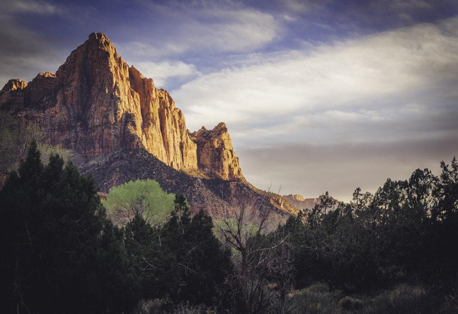 Zion National Park XVIII