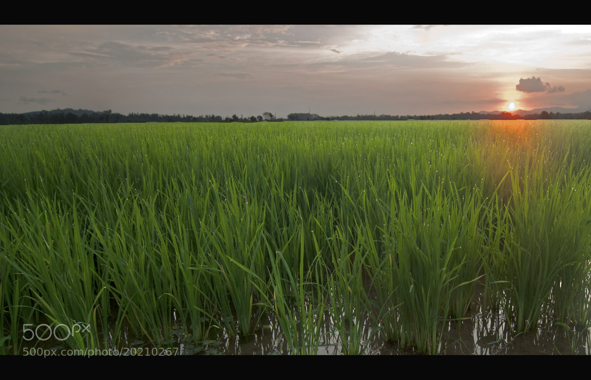 Photograph Labuh Banting green  by aziz azizam on 500px