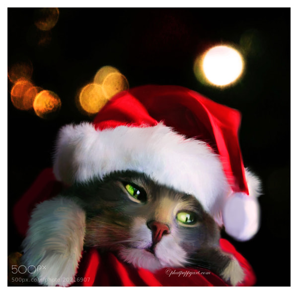 Photograph A Purrfect Christmas by Phatpuppy Art on 500px