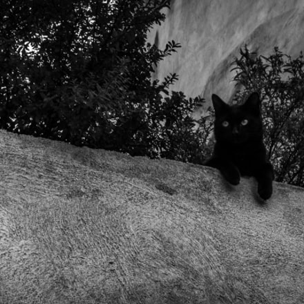 cat on a wall, Pentax K-30, HD PENTAX-DA 35mm F2.8 Macro Limited