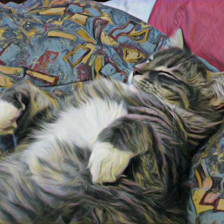 Gracie Napping, Canon POWERSHOT ELPH 340 HS
