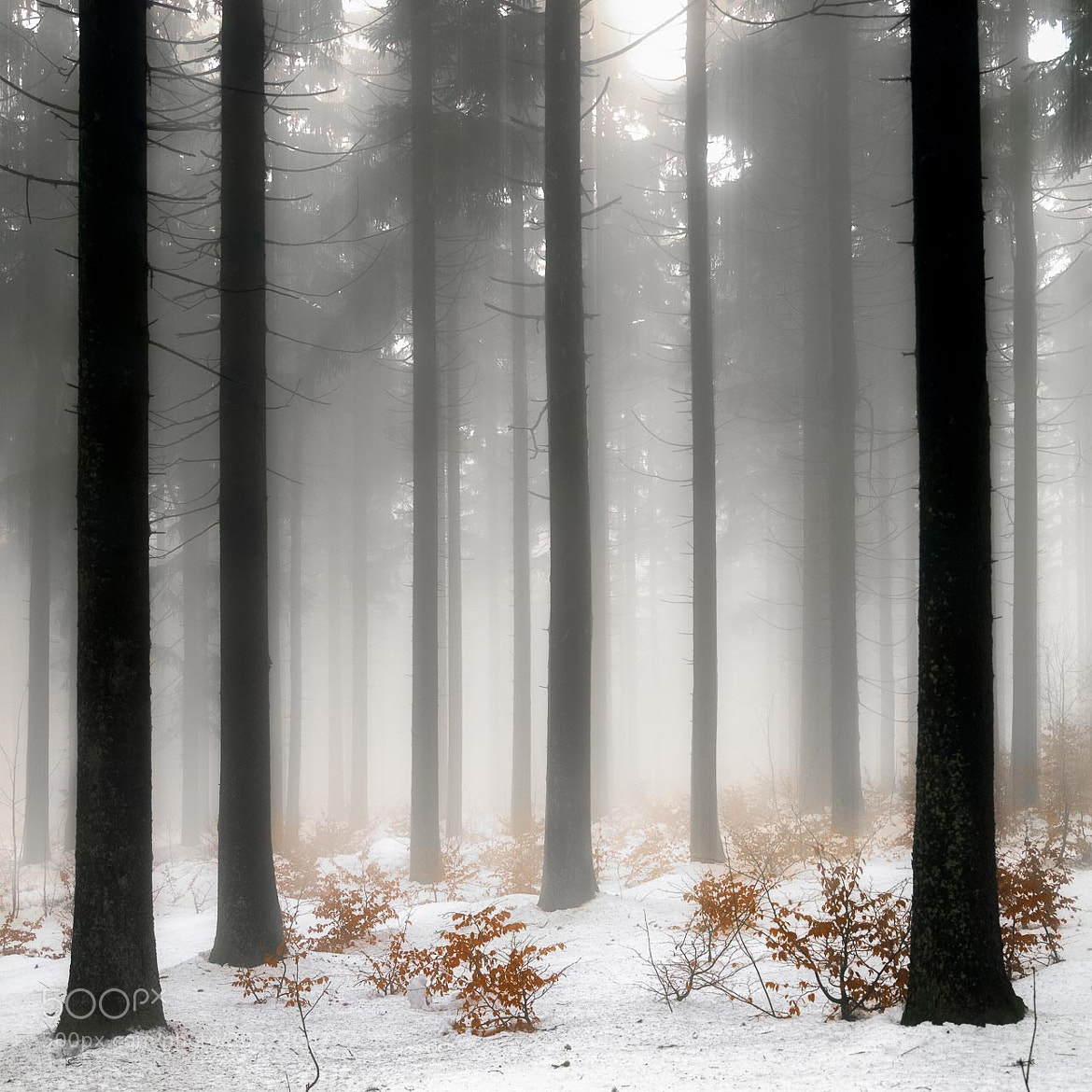 Photograph winterforest by Franz Bogner on 500px