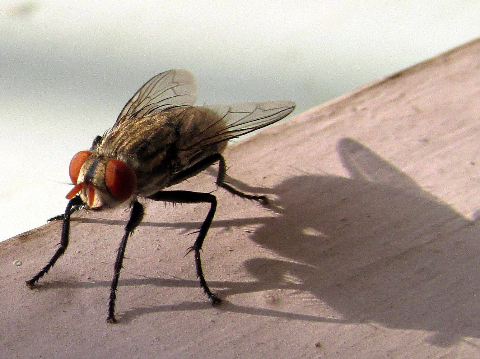 Photograph BIG FLY by Arpan  Sinha on 500px
