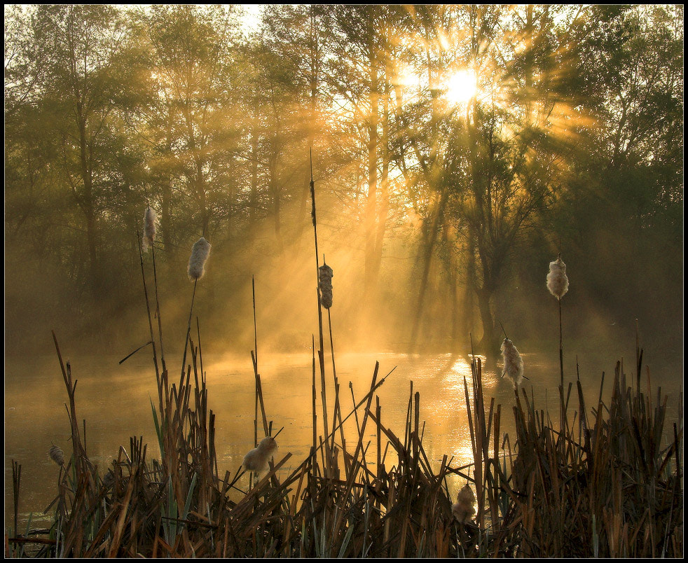 Photograph Morning in the Swamp by Alexander Kitsenko on 500px